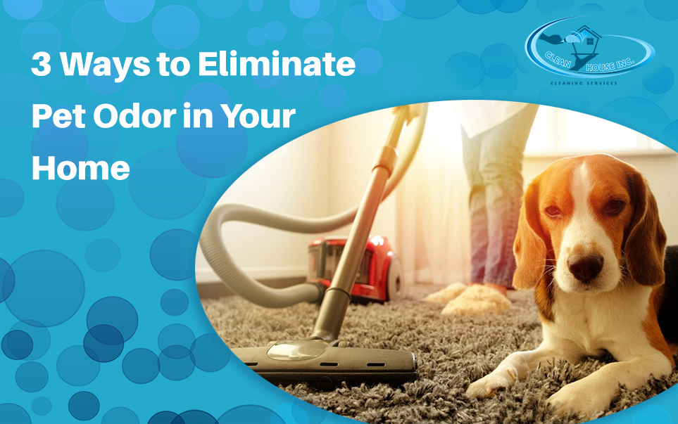 3 Ways to Eliminate Pet Odor in Your Home