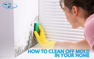 How to Clean Off Mold In Your Home